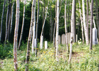A Neglected Cemetery