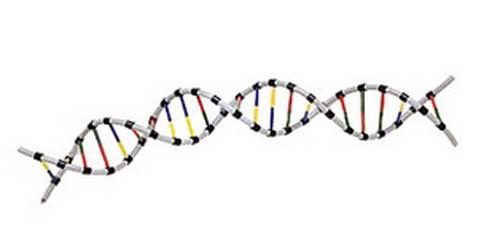 DNA-500p